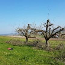Baum schneiden nacher