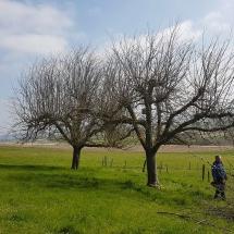 Baum schneiden vorher